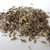 Semi di finocchio selvatico da piante a coltura bi